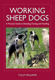 Working Sheep Dogs by Tully Williams