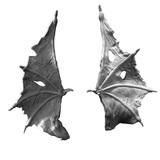Kings of War Undead Wyrm Wings Upgrade
