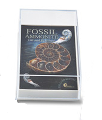 Gift Boxed Fossil: Cut & Polished Ammonite