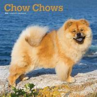 Chow Chows 2020 Square Wall Calendar by Inc Browntrout Publishers
