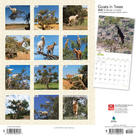 Goats in Trees 2020 Square Wall Calendar image