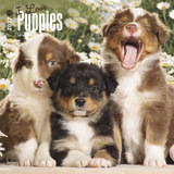 I Love Puppies 2017 Square Calendar by Inc Browntrout Publishers