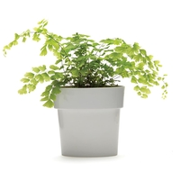 Monkey Business: Slim Flower Pot (Grey)