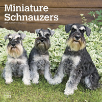 Miniature Schnauzers International Edition 2019 Square Wall Calendar