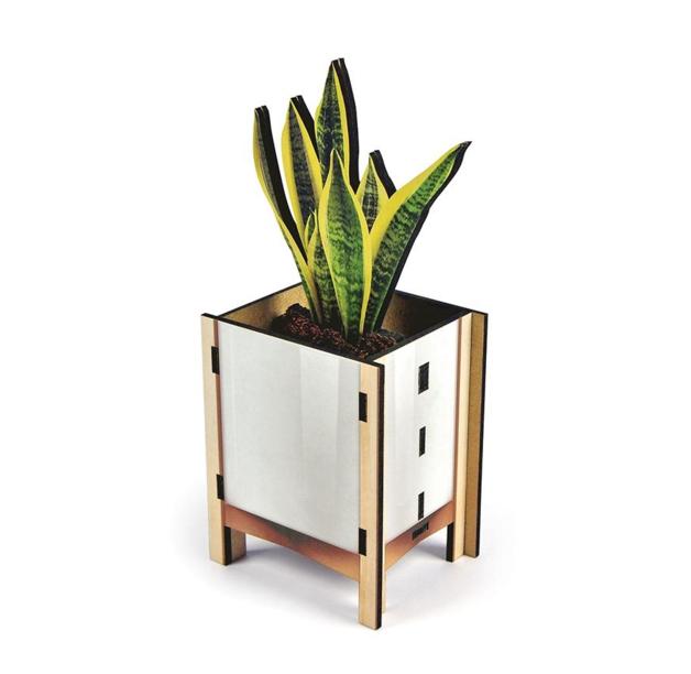 Fred Pop Desk Plants - Snake Plant