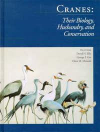 Cranes image