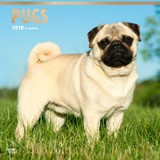 Pugs 2018 Square Wall Calendar by Inc Browntrout Publishers