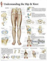 Understanding Hip and Knee image