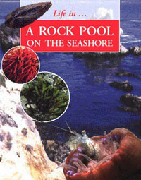 LIFE IN A ROCKPOOL ON THE SEASHORE