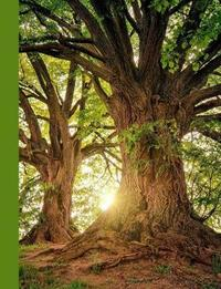 Sunshine Through Majestic Trees by Ahri's Notebooks & Journals