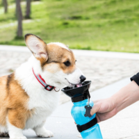 Ape Basics: Portable Pet Dog Water Bottle