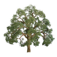 JTT: N Scale Live Oak Trees - 4 Pack