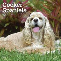 Cocker Spaniels 2019 Square by Inc Browntrout Publishers