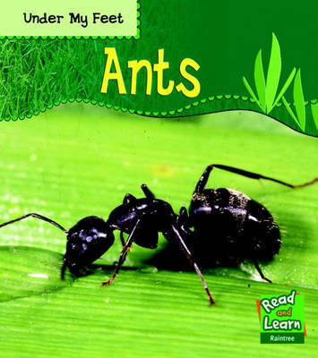 Ants by Patricia Whitehouse