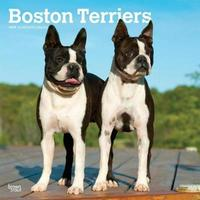 Boston Terriers 2019 Square Wall Calendar by Inc Browntrout Publishers image