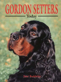 Gordon Setters Today by Jose Baddeley