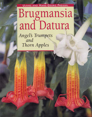 Brugmansia and Datura: Angel's Trumpets and Thorn Apples by Ulrike Preissel image