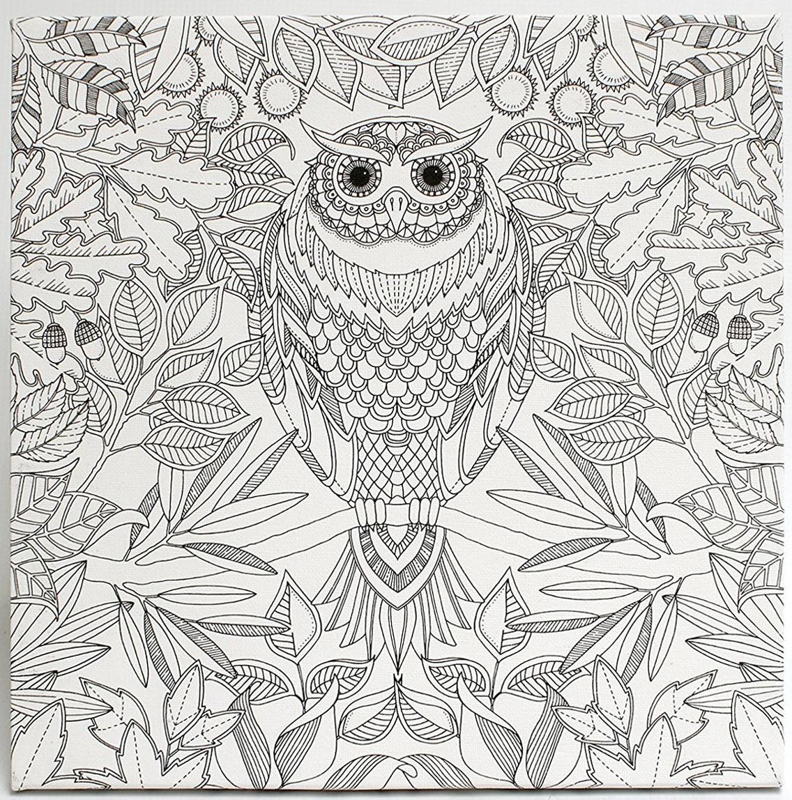 Buy Johanna Basford Canvas 12x12 Secret Garden Owl At