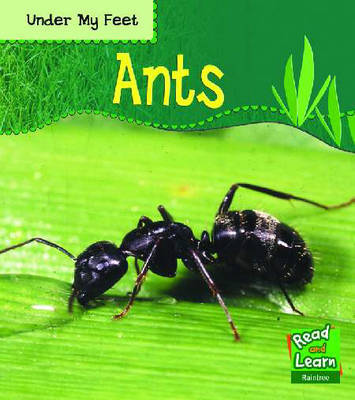 Under My Feet: Ants Hardback image