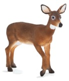 Animal Planet: White Tailed Deer Doe