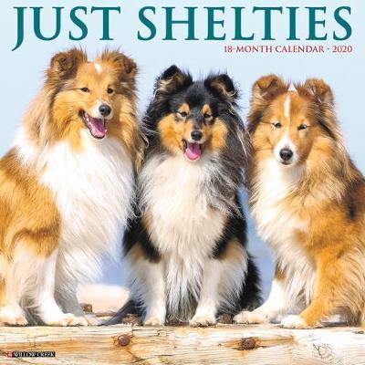 Just Shelties 2020 Wall Calendar (Dog Breed Calendar) by Willow Creek Press