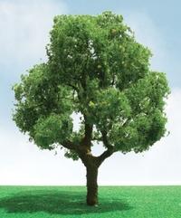 JTT: H0 Scale Deciduous Trees - 2 Pack
