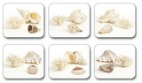 Shells Coasters (Set 6)