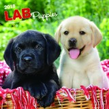 Labrador Retriever Puppies 2018 Square Wall Calendar by Inc Browntrout Publishers