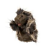 Folkmanis Hand Puppet - Little Porcupine