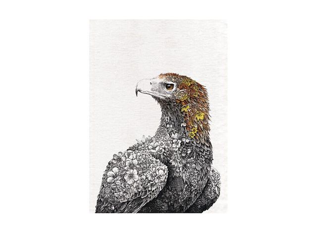Maxwell & Williams: Marini Ferlazzo Birds Tea Towel - Wedge-tail Eagle