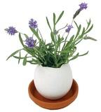 Eggling: Mini Plant Kit - Lavender