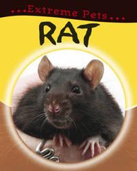 Rat by Deborah Chancellor image