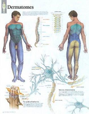 Understanding Dermatones image