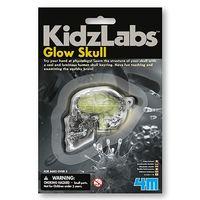 4M: Mini Science - Glow Skull