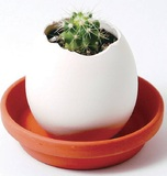 Eggling: Mini Plant Kit - Cactus