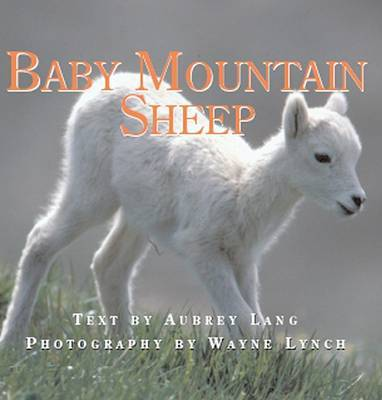 Baby Mountain Sheep by Aubrey Lang