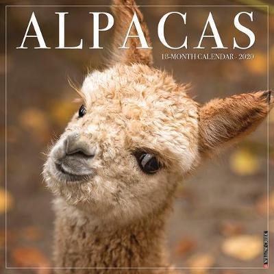 Alpacas 2020 Wall Calendar by Willow Creek Press
