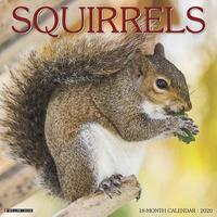 Squirrels 2020 Wall Calendar by Willow Creek Press