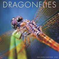 Dragonflies 2020 Wall Calendar by Willow Creek Press