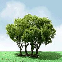 JTT: N Scale Privet Trees - 2 Pack