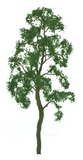 JTT: H0 Scale Birch Tree - 2 Pack