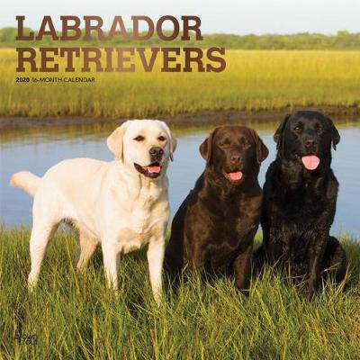Labrador Retrievers 2020 Square Foil Wall Calendar