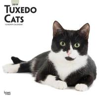 Tuxedo Cats 2019 Square Wall Calendar by Inc Browntrout Publishers