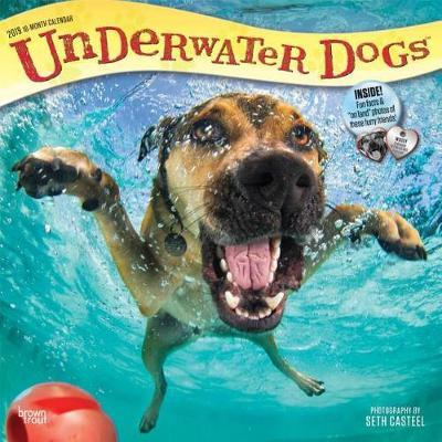 Underwater Dogs 2019 Square Wall Calendar by Inc Browntrout Publishers image