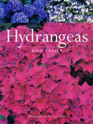Hydrangeas by Glyn Church