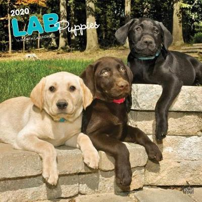 Labrador Retriever Puppies 2020 Square Wall Calendar