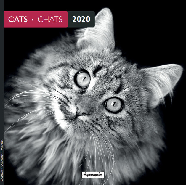 Aquarupella: 2020 Wall Calendar - Cats Black & White