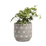 General Eclectic - Large Concrete Star Vase