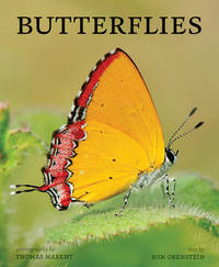 Butterflies by Ronald Orenstein