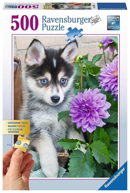 Ravensburger: Cute Husky - 500pc Puzzle